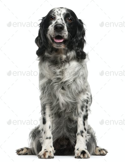 Mixed-breed, 7 years old, sitting in front of white background