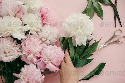Girl hand holding white peony at pink peonies bouquet and scissors on pastel pink pape
