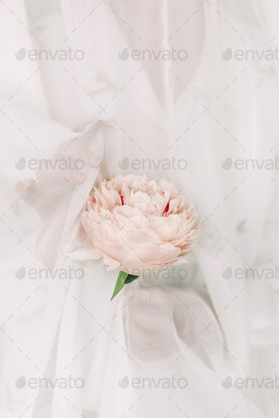 Aesthetic sensual image of beautiful woman behind tulle holding pink peony