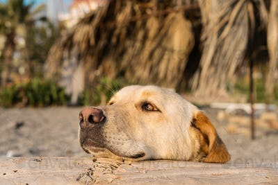 Dog on the beach enjoying summer