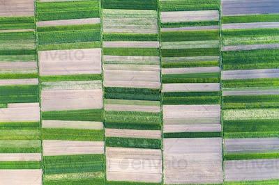 Aerial drone top view flight over green garden fields