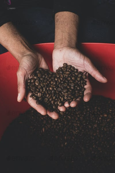 High angle close up of person holding freshly roasted coffee beans.