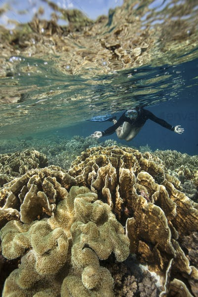 Snorkeler in very shallow water above a coral reef reflecting in the water surface above.