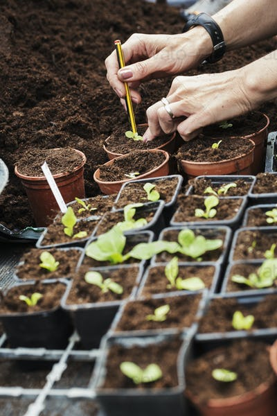 Close up high angle view of person planting a seedling in a terracotta flower pot.