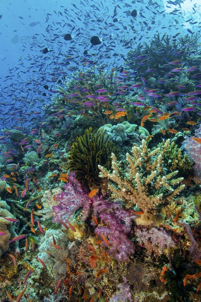 Coral reef with growing soft corals underwater, in vivid colours.