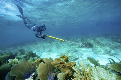 "Speardiver wearing ""water"" camouflage wetsuit to blend in with environment free dives to coral"