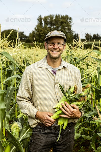 Smiling farmer standing in a corn field, holding bunch of maize cobs.