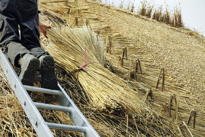 Man thatching a roof, standing on a ladder, yelms of straw.