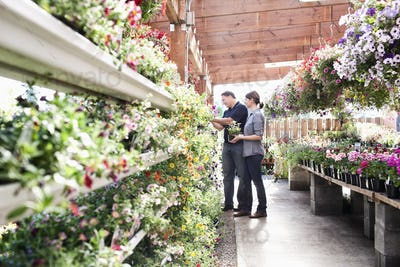 Caucasian man and woman shopping for new plants at a garden center nurery.