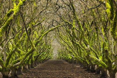 Overgrown orchard, Oregon, USA