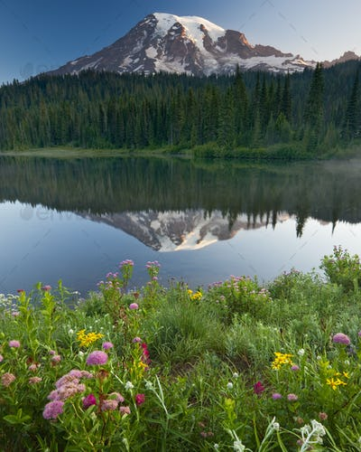 Mount Rainier, a snow capped peak, surrounded by forest reflected in the lake surface in the Mount