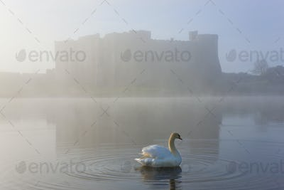 Swan on a moat covered in mist, with medieval castle in the distance.