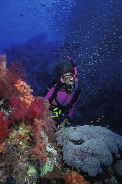 Diver underwater by a colorful assortment of soft corals in Red Sea waters.