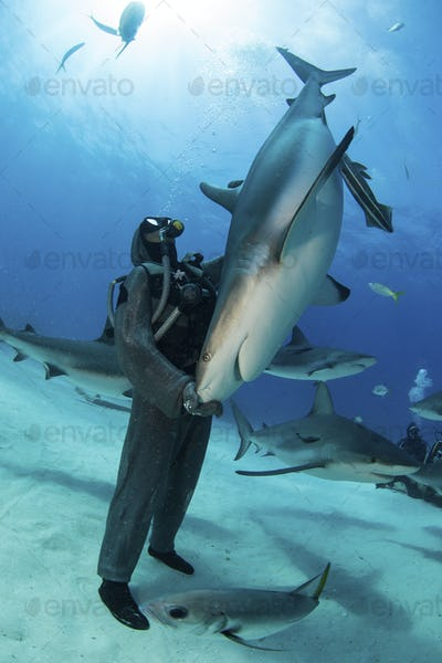 Shark feeder/wrangler, Christina Zenato, interacts with seemingly tame Caribbean reef sharks, while