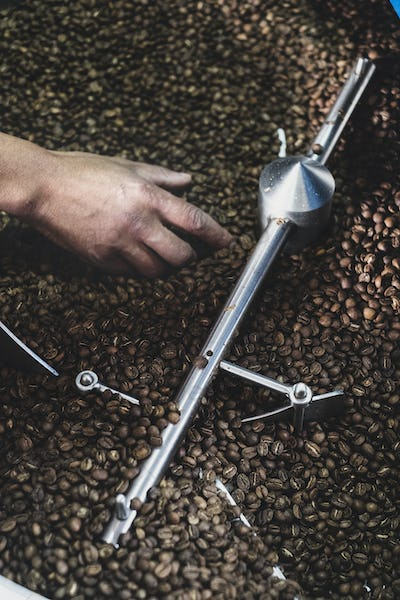 High angle close up of person checking freshly roasted coffee beans in coffee roaster.