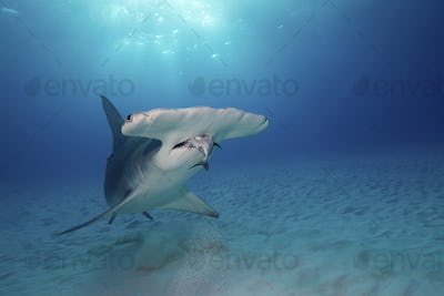 In recent years photography enthusiasts have been drawn to Bimini as dive operators have started to