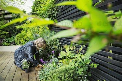 Woman kneeling on a wooden deck, planting flower in a flowerbed.