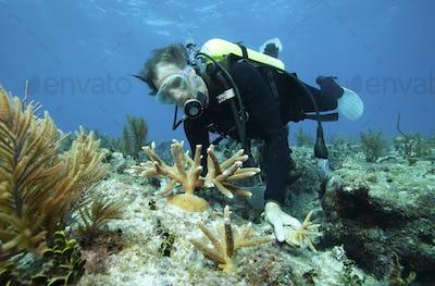 Biologist, Ken Nedimyer, transplants coral, Florida Keys National Marine Sanctuary,Ken Nedimyer