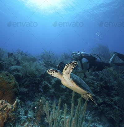 Scuba diver with Turtle on coral reef