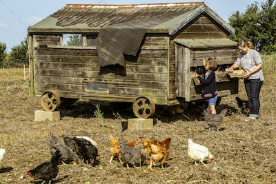 Woman and girl collecting eggs from a hen house on a farm.