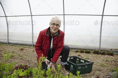 A woman working with plants in a large polytunnel in a commercial plant nursery.
