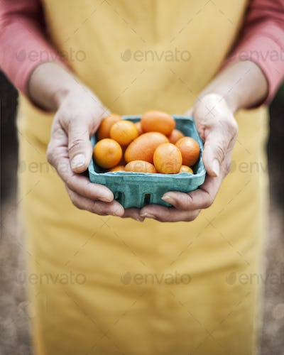 High angle close up of person holding punnet of fresh orange tomatoes at a fruit and vegetable