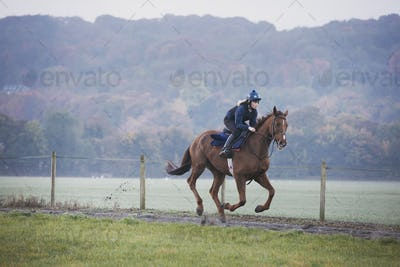 Woman galloping on a thoroughbred race horse along a path through a field.