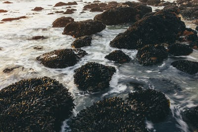 Long exposure of shellfish covered rocks and incoming surf and waves at dusk, Point  Reyes National