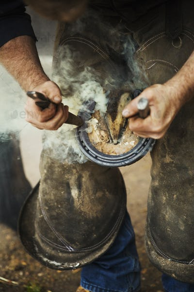 A farrier shoeing a horse, bending down and fitting a new horseshoe to a horse's hoof.