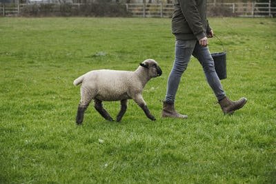 A farmer walking across a field with a bucket of feed, followed closely by a sheep.