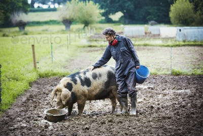 Woman stood next to a pig eating, holding a bucket.