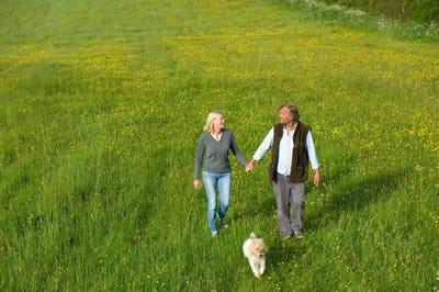 High angle view of man and woman walking hand in hand across a meadow, small dog running beside