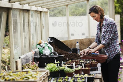 Woman standing in a greenhouse at a bench with flower pots, wearing checkered shirt, planting.