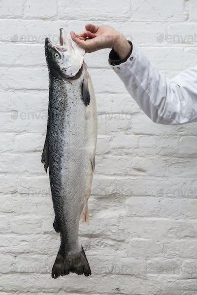 Close up of fishmonger holding aloft fresh salmon.