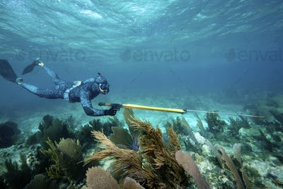"Speardiver wearing ""water"" camouflage wetsuit to blend in with environment,Breathhold diver"