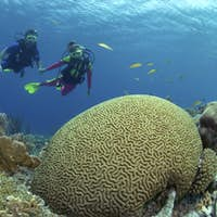 Pair of Scuba divers on a shallow reef in Klein Bonaire.