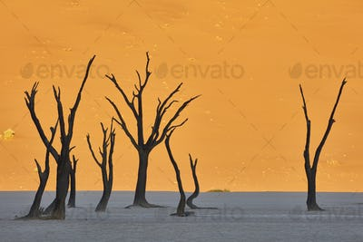 Bare trees in front of a sand dune.