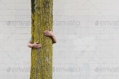 A man hugging a tree on an urban street in Seattle.