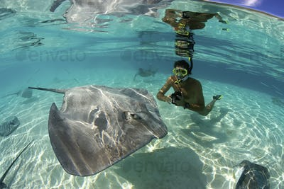 A male snorkeler with a video camera approaches a Tahitian stingray, Himantura fan, French Polynesia