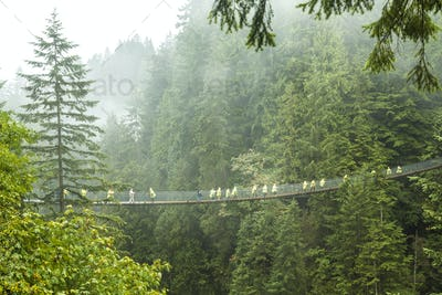 Distant view of group of people crossing suspension footbridge over forest tree canopy.