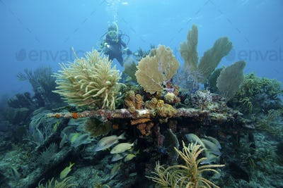 "Scuba diving on the ""Civil War Wreck"", Florida Keys National Marine Sanctuary"