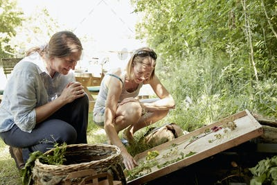 Two women looking at a selection of suitable natural plants and flowers for foraging. A summer