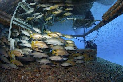 Photographer with schooling fish at Aquarius Habitat.