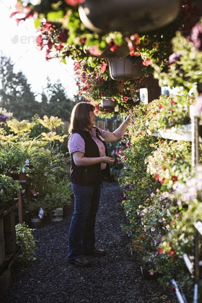 Caucasian woman shopping for new plants at a garden center nursery, choosing from a display of