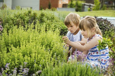 Boy and girl kneeling side by side by a shrub in a garden.