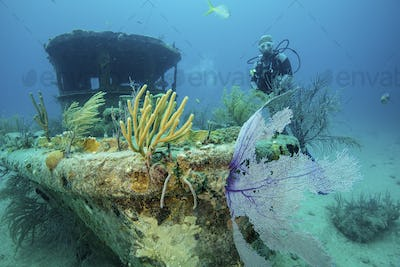 Diver explores the Papa Doc shipwreck.  Once a shrimp boat, the boat sunk during a storm while
