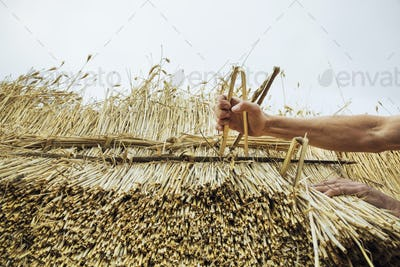 Man thatching a roof, inserting hazel wood spars to fasten the straw.