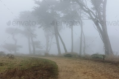 Dense fog among cypress trees, road in foreground, near Historic Pierce Point Ranch, Point Reyes