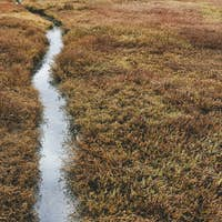 Detail of intertidal wetlands and water channels, Drakes Estero, Pt. Reyes National Seashore,