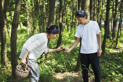 Man and woman carrying basket standing outdoors in a forest, collecting mushrooms.